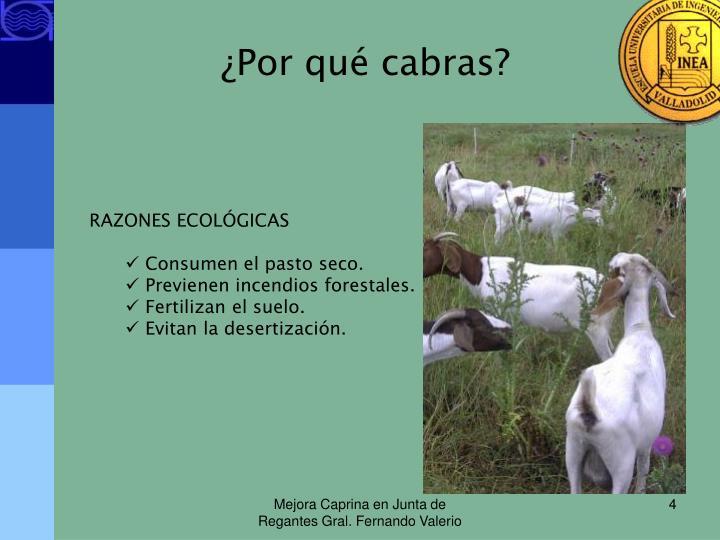 ¿Por qué cabras?