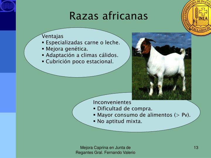 Razas africanas