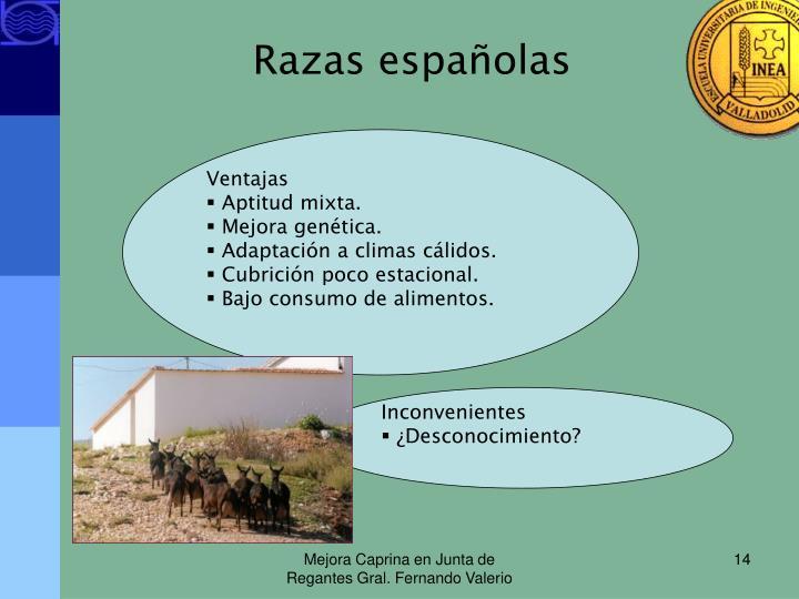 Razas españolas
