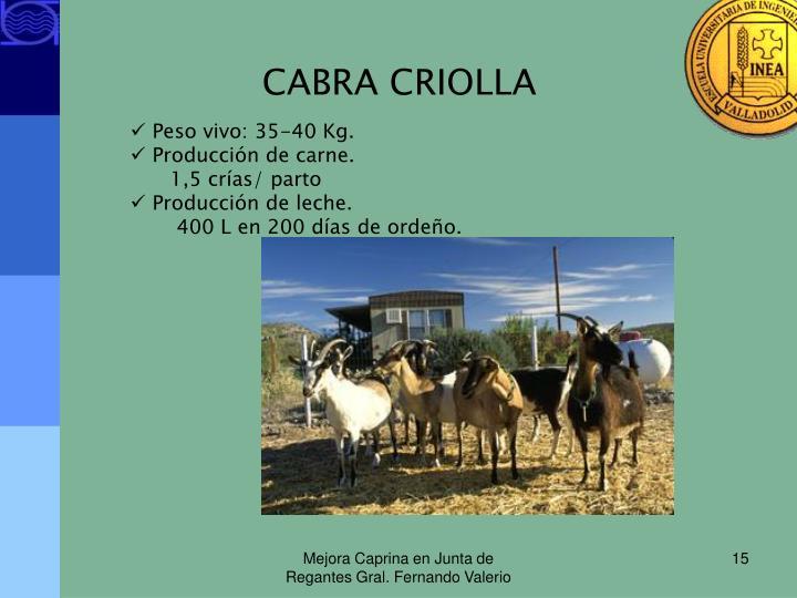 CABRA CRIOLLA