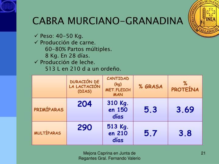 CABRA MURCIANO-GRANADINA