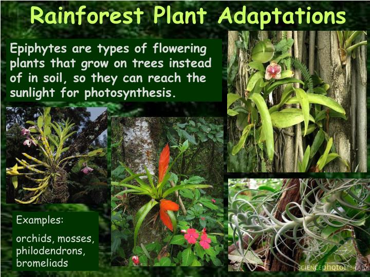 The Diverse Plants and Animals of the Tropical Rainforest