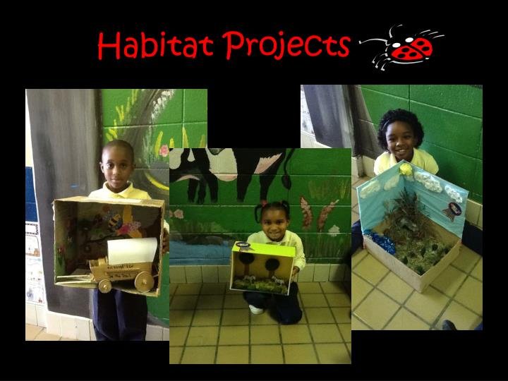 Habitat Projects