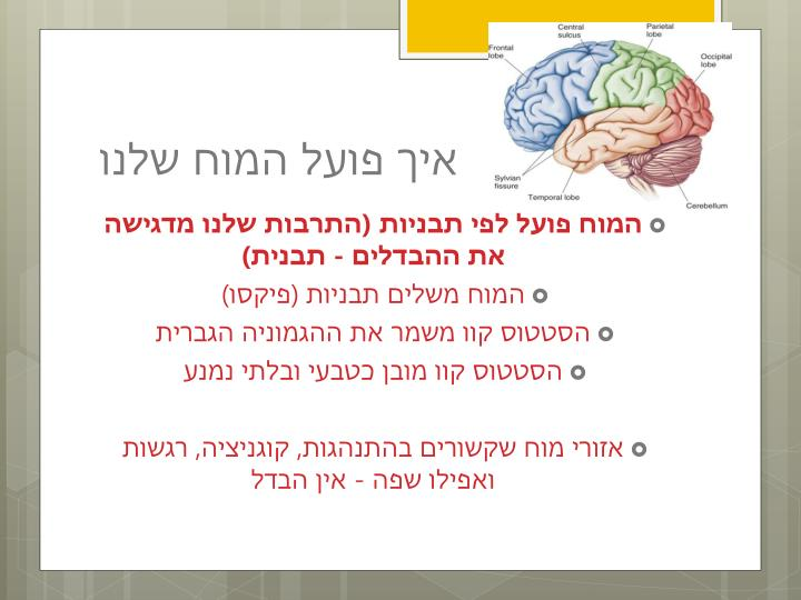איך פועל המוח שלנו