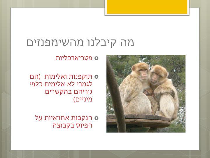 מה קיבלנו מהשימפנזים