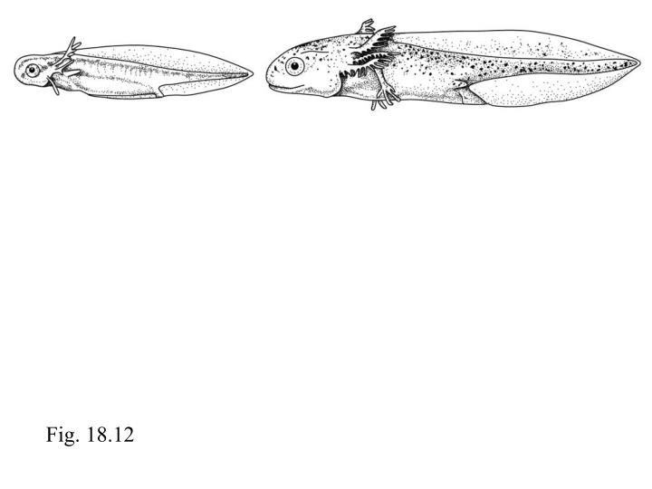 Fig. 18.12
