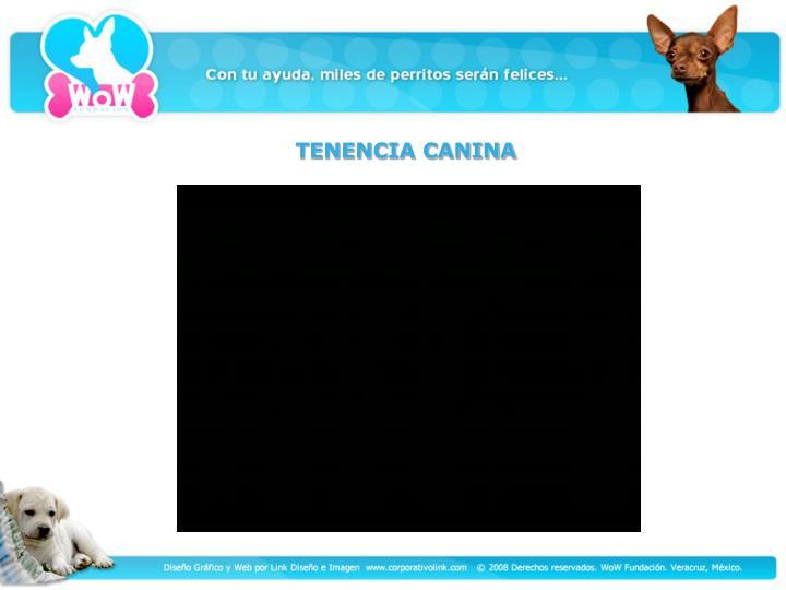 TENENCIA CANINA
