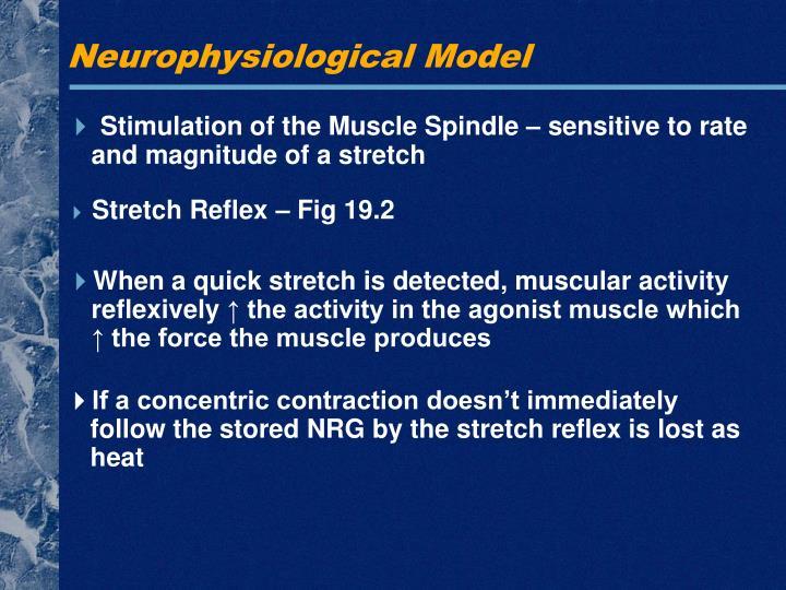 Neurophysiological Model
