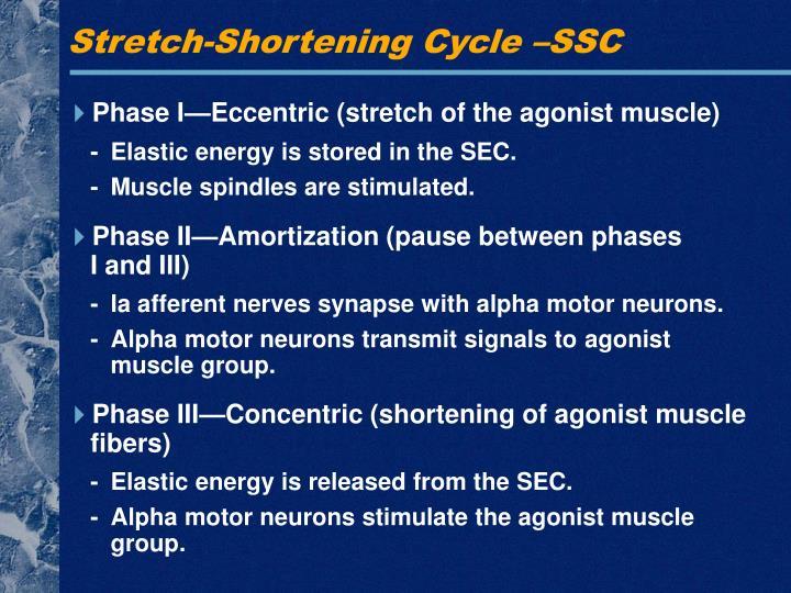 Stretch-Shortening Cycle –SSC