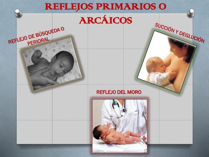 REFLEJOS PRIMARIOS O ARCÁICOS