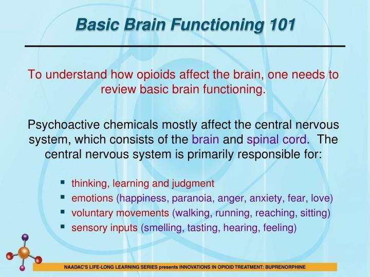 Basic Brain Functioning 101