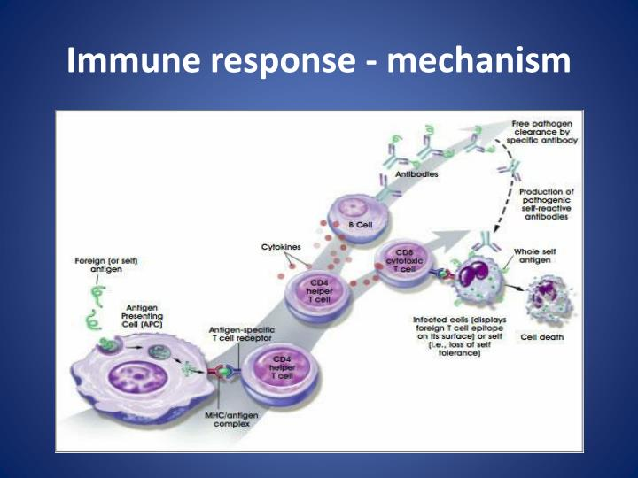 Immune response - mechanism