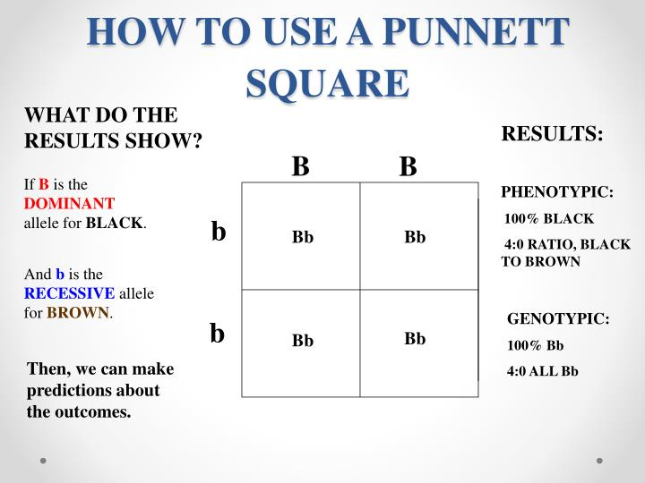 HOW TO USE A PUNNETT SQUARE