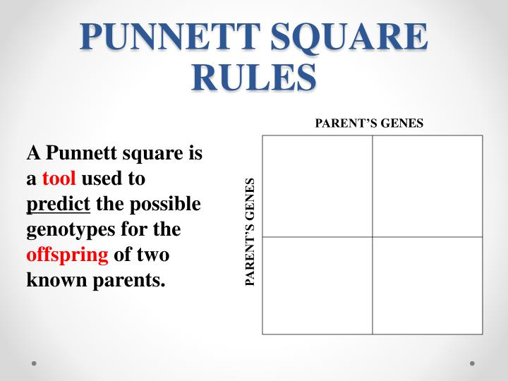 Punnett square rules