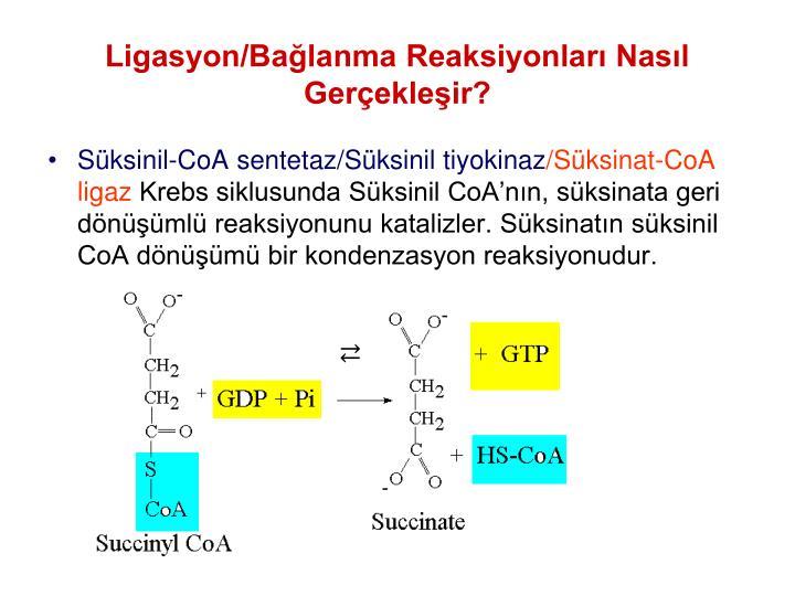 Ligasyon/Balanma Reaksiyonlar Nasl Gerekleir?