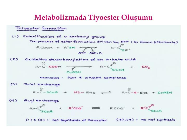 Metabolizmada Tiyoester Oluumu