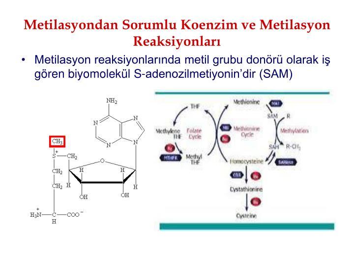 Metilasyondan Sorumlu Koenzim ve Metilasyon Reaksiyonlar