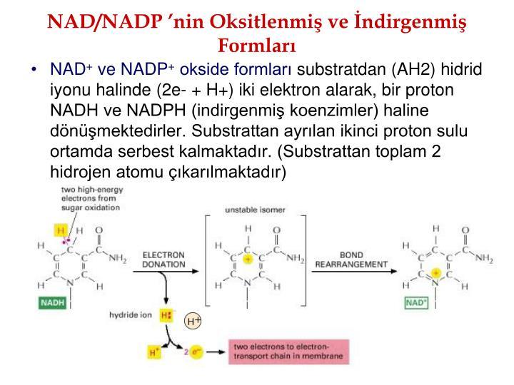NAD/NADP nin Oksitlenmi ve ndirgenmi Formlar