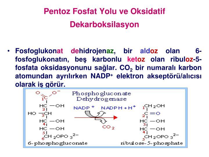 Pentoz Fosfat Yolu ve Oksidatif Dekarboksilasyon