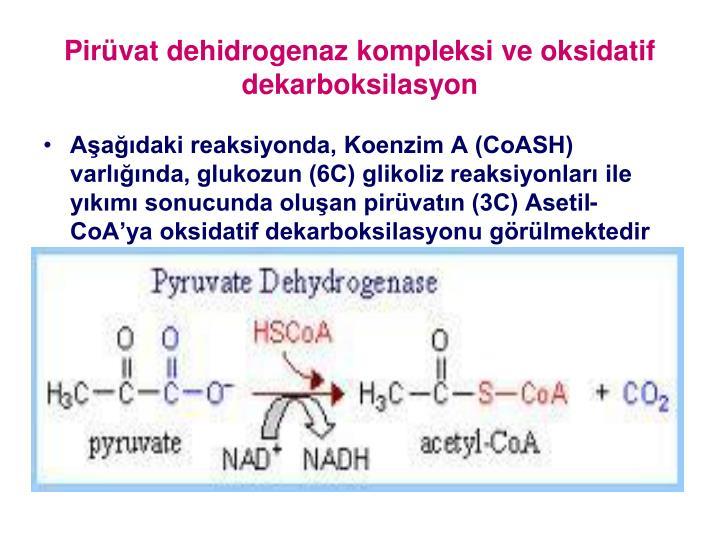 Pirvat dehidrogenaz kompleksi ve oksidatif dekarboksilasyon