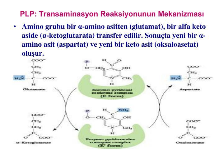 PLP: Transaminasyon Reaksiyonunun Mekanizmas