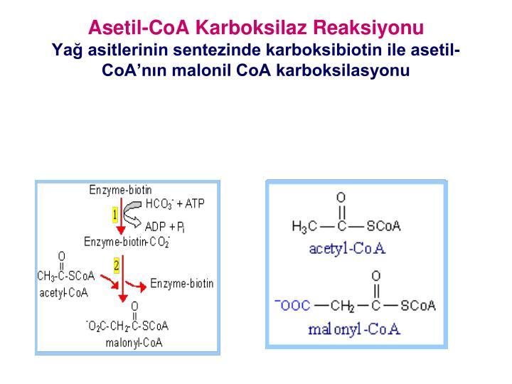 Asetil-CoA Karboksilaz Reaksiyonu