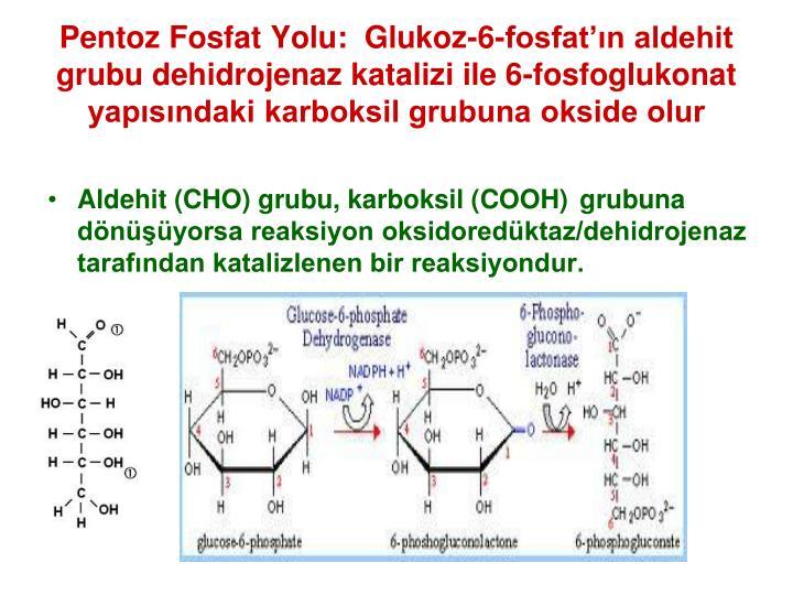 Pentoz Fosfat Yolu:  Glukoz-6-fosfatn aldehit grubu dehidrojenaz katalizi ile 6-fosfoglukonat yapsndaki karboksil grubuna okside olur