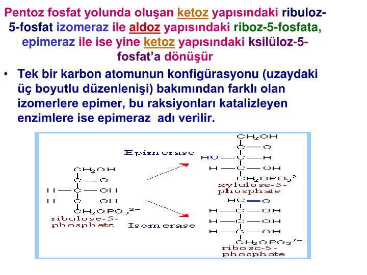 Pentoz fosfat yolunda oluşan