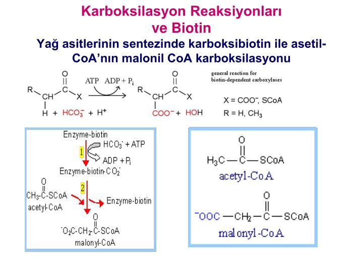 Karboksilasyon Reaksiyonları