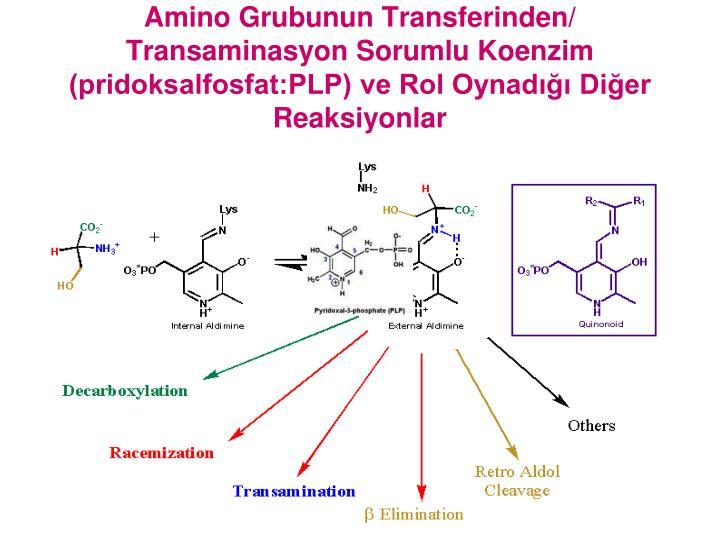 Amino Grubunun Transferinden/ Transaminasyon Sorumlu Koenzim (pridoksalfosfat:PLP) ve Rol Oynadığı Diğer Reaksiyonlar