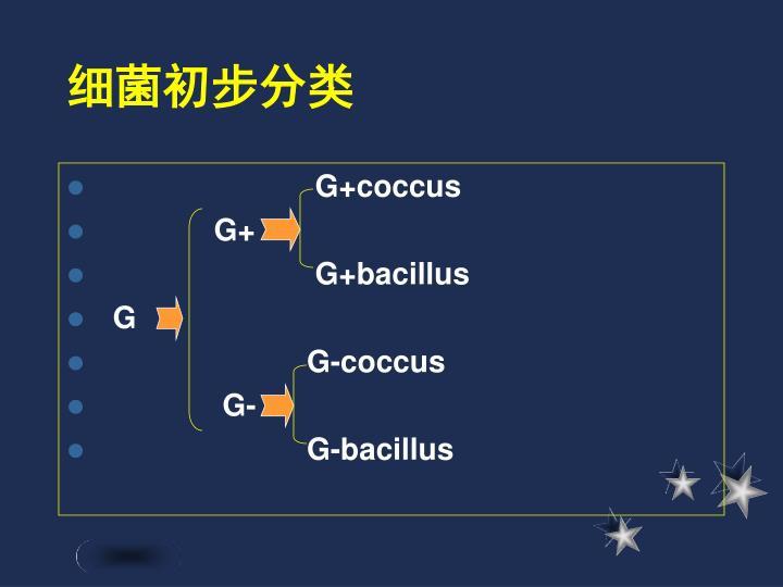 细菌初步分类