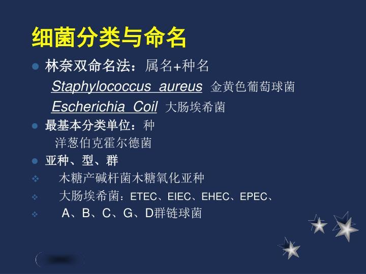 细菌分类与命名