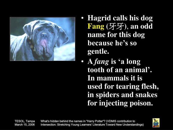 Hagrid calls his dog