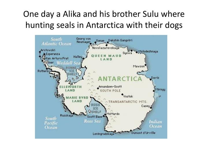 One day a alika and his brother sulu where hunting seals in antarctica with their dogs