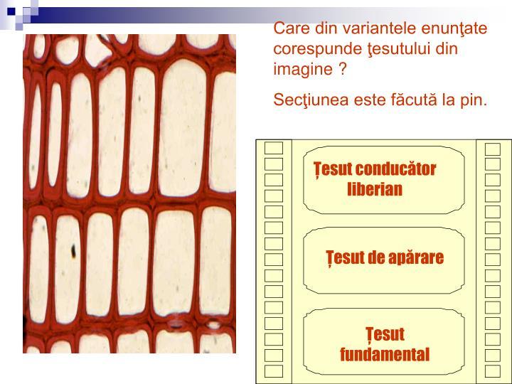 Care din variantele enunţate corespunde ţesutului din imagine ?