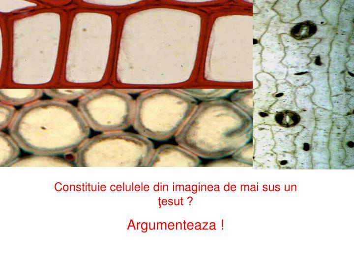 Constituie celulele din imaginea de mai sus un ţesut ?