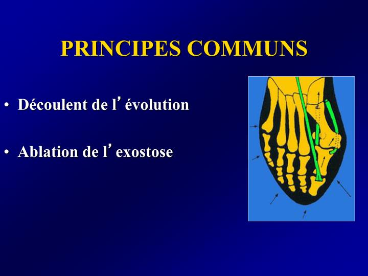 PRINCIPES COMMUNS