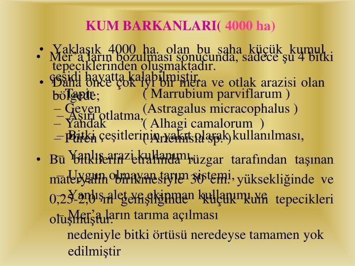 KUM BARKANLARI(