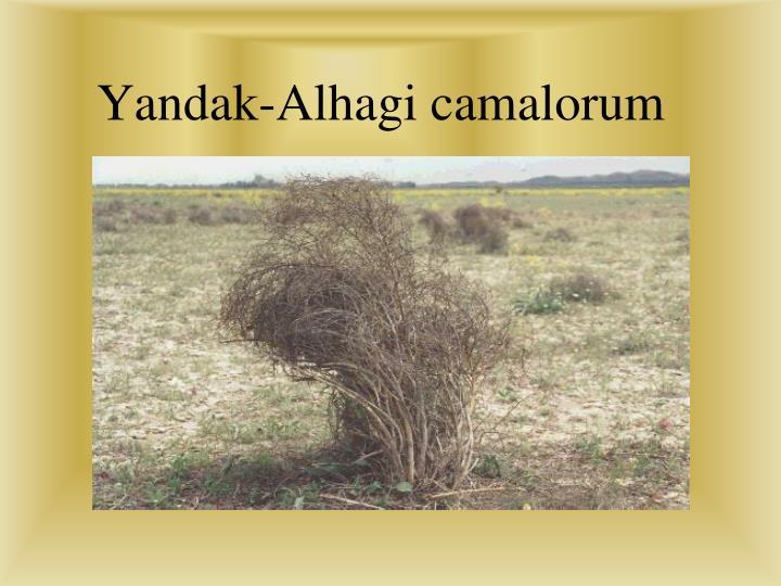 Yanda