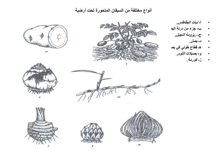 أنواع مختلفة من السيقان المتحورة تحت أرضية