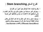 stem branching