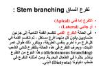 stem branching1