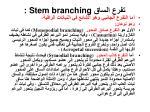 stem branching2