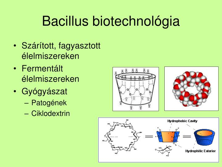 Bacillus biotechnológia