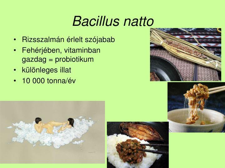 Bacillus natto