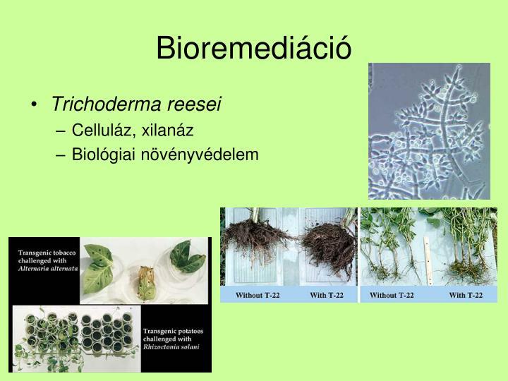 Bioremediáció