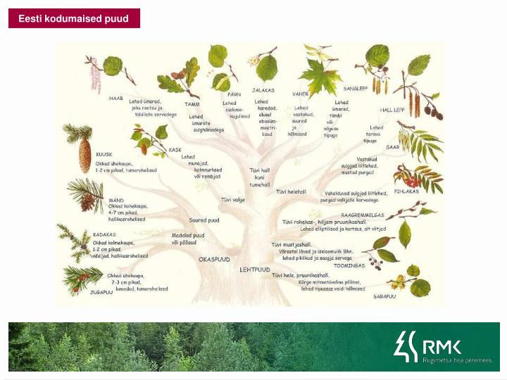 Eesti kodumaised puud