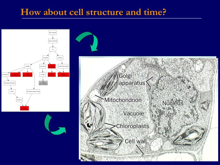 How about cell structure and time?