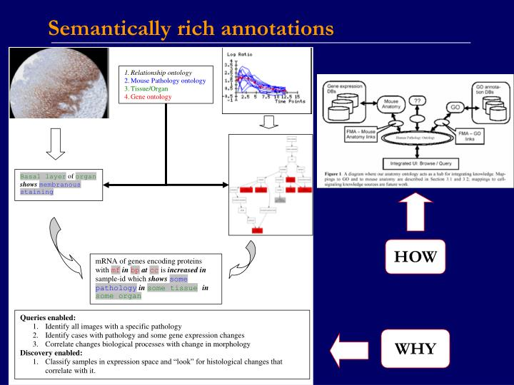 Semantically rich annotations
