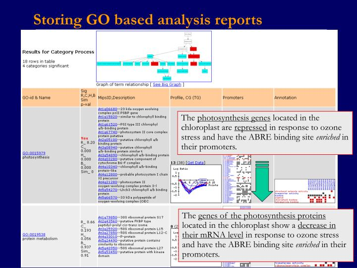 Storing GO based analysis reports